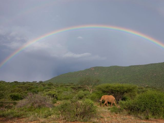 Rainbow Wall African Elephant